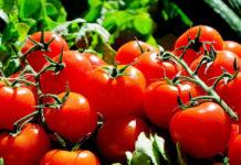Jak zrobić przecier pomidorowy?